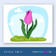 Tulipán-pink -3 db-os ovisjel