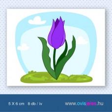 Tulipán - lila -8 db-os ovisjel