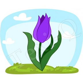 Póló: Tulipán lila